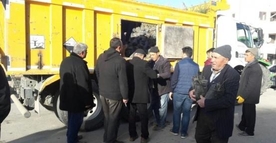 Altunhisar'da vatandaşlara ceviz fidanı dağıtıldı