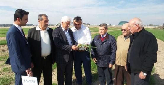 'Antalya Buğdayını Arıyor' projesi