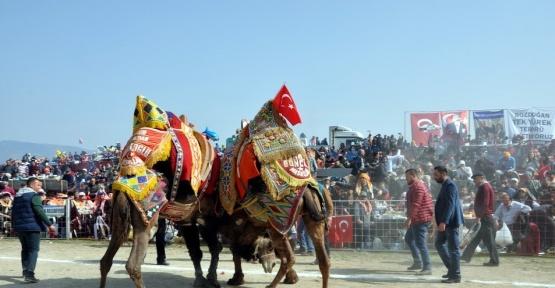 Bozdoğan'da deve güreşlerini 15 bin kişi izledi