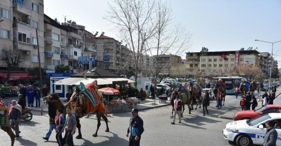 Güreşçi develer şehir turu attı