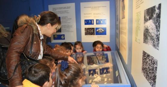 Kartal Belediyesi kreş öğrencileri Deniz Kabukları Müzesi'ni gezdi