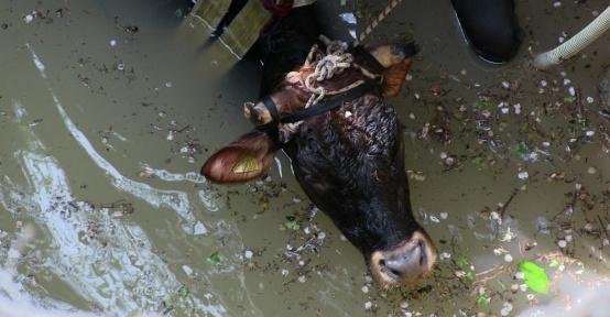 Kuyuya düşen inek için seferber oldular