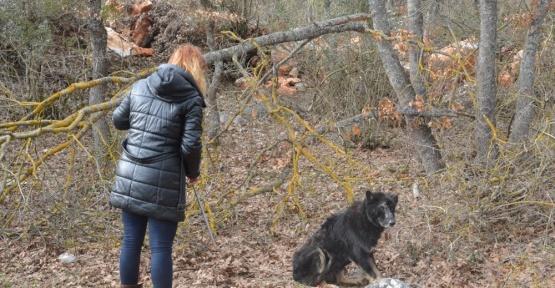 Ormanda hastalanan siyah kurda operasyon