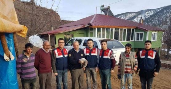 Refahiye'de bulunan yavru boz ayı koruma altına alındı