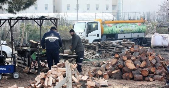 Ağaç dalları yüzlerce aileyi ısıttı, Manisa haberleri