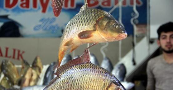 Balık fiyatları düştü ama kalkan hala cep yakıyor