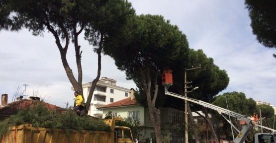 Büyükşehir belediyesinden bahar temizliği