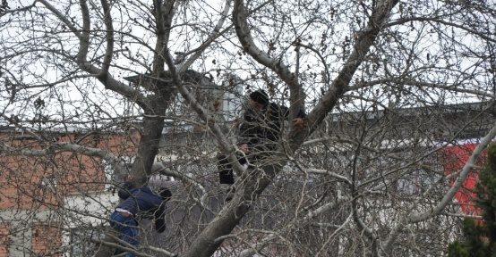 Cumhurbaşkanı Erdoğan'ı yakından görebilmek için ağaca çıktılar