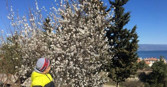 Güneşi gören ağaçlar çiçek açtı