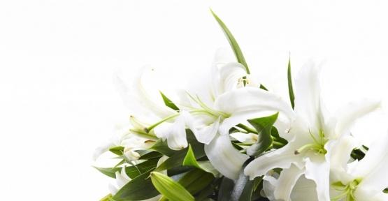 """""""Kadınlar Günü'nün favori çiçeği; lilyum"""""""