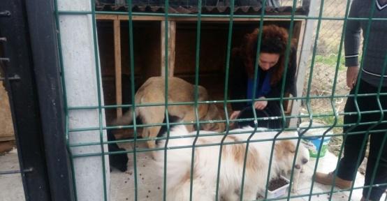 Lisesi öğrencilerden barınak hayvanlara yem