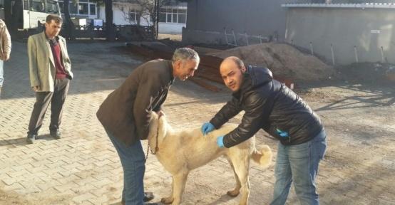 Malkara'da 5 bin 500 köpek ve kediye kuduz aşısı yapılacak