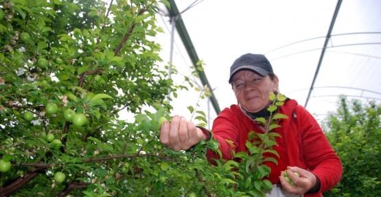 (Özel Haber) Yılın ilk eriği Rusya için hasat edildi