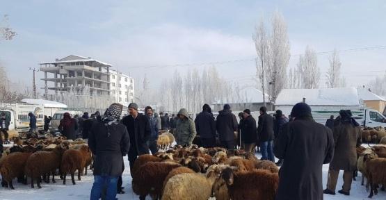 Patnos Ziraat Odası Başkanı Hakverdi, hayvan pazarında incelemede bulundu