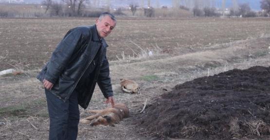 Sahipsiz köpeklerin öldürüldüğü iddiası