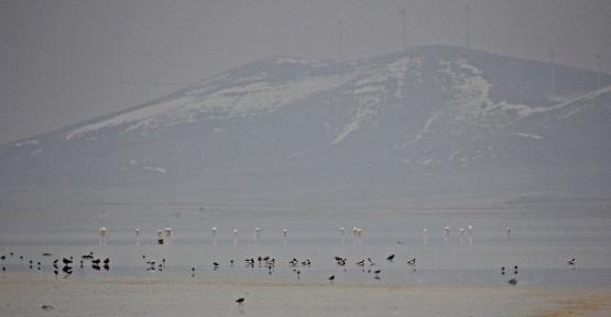 Seyfe Gölü'ne flamingo akını