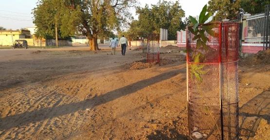 Sudan'da mango meyvesi tanıtım ve yetiştiriciliğine destek