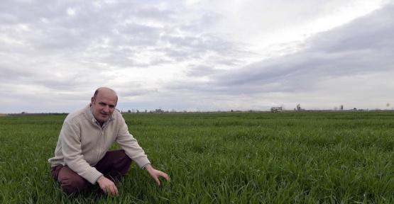 Yağmur, buğday ve mısır üreticisini güldürdü
