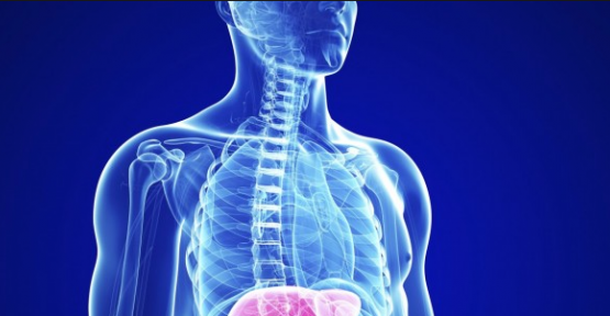 Karaciğer Yağlanması, belirtileri ve tedavisi