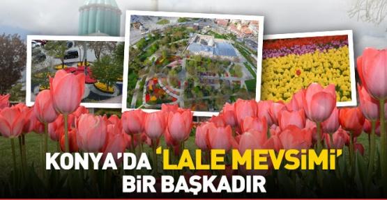 Konya'da lale bir başka güzel