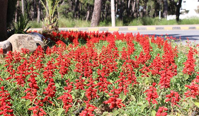 Manavgat'a 186 bin adet mevsimlik çiçek dikimi yapılıyor
