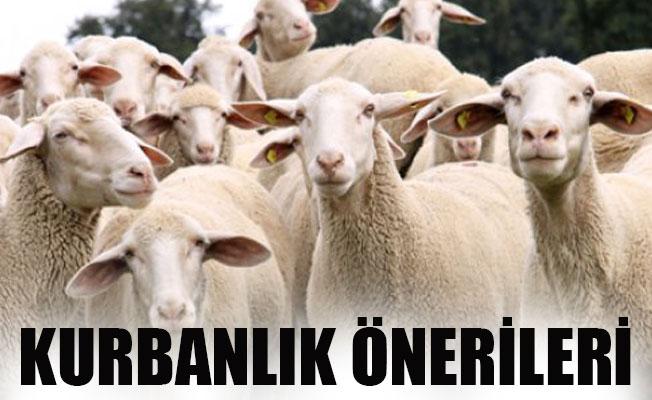 KURBANLIK ÖNERİLERİ