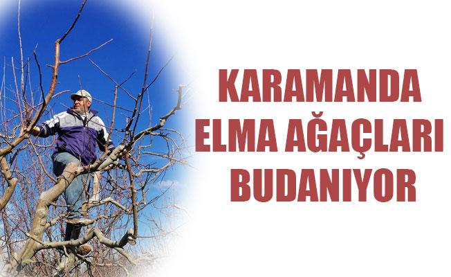 KARAMANDA ELMA AĞAÇLARI BUDANIYOR