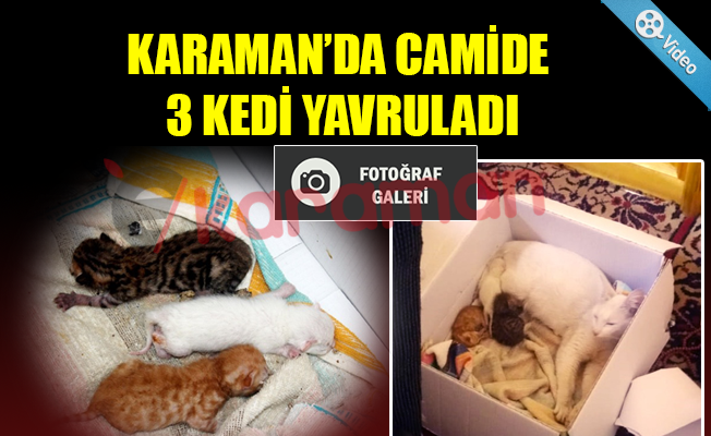 KARAMAN'DA CAMİDE 3 KEDİ YAVRULADI
