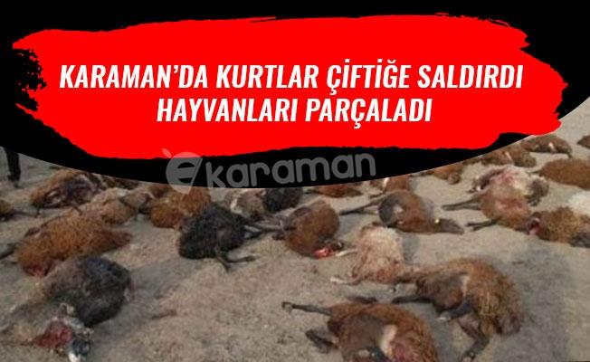 KARAMAN'DA KURTLAR ÇİFTİĞE SALDIRDI HAYVANLARI PARÇALADI
