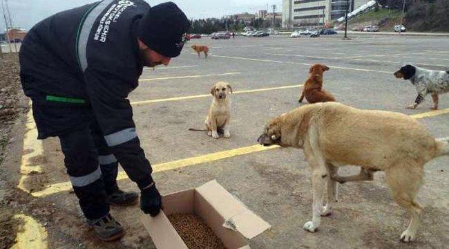 Kocaeli'de sokak hayvanlarına kilo kilo kuru mama