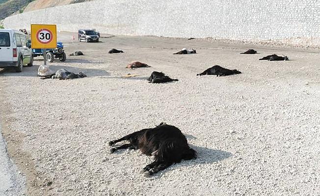 Hayvan Ölümleri Hakkında Açıklama Geldi...