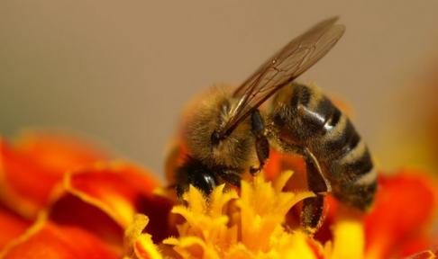 Arıcılıkta İlkbahar Bakımı Nedir Nasıl Yapılır?