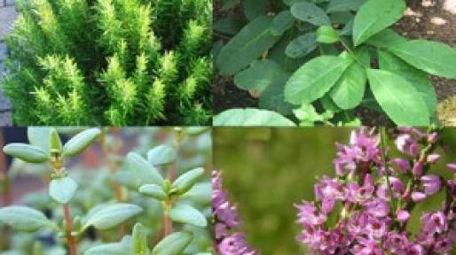 Bitkiler ile zayıflama teknikleri