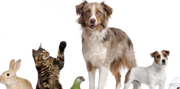 Hayvan Sahiplenirken Neler Gerekiyor? (Resmi İşlem ve Belgeler)
