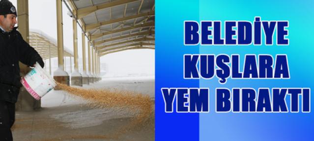 Karaman Belediyesi ekipleri kuşlar için yem bıraktı