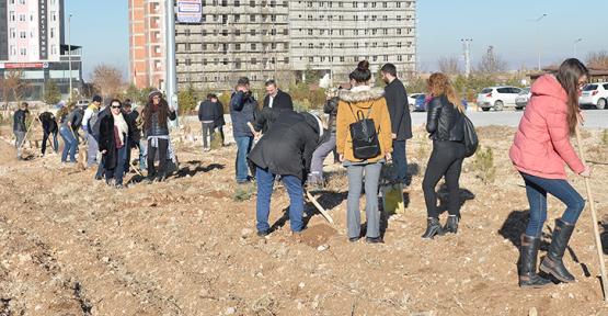 Karaman'da Kmü öğrencileri fidan dikti