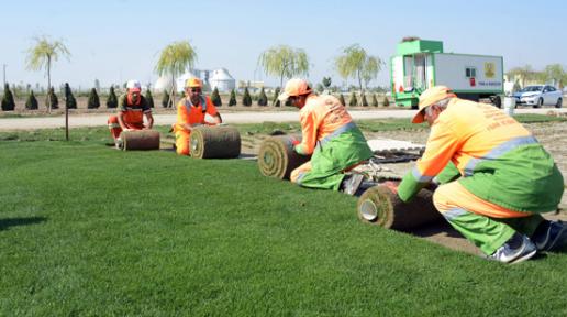 Konya Büyükşehir Belediyesi, çimi kendisi üretiyor