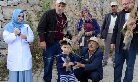 Konya Büyükşehir, İpekböcekçiliğini dut fidanı ile destekliyor