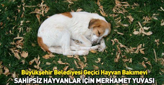 Konya'da Sahipsiz Hayvanlar İçin Merhamet Yuvası