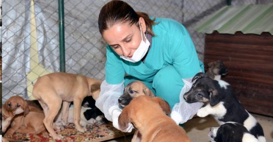 Mersin Büyükşehir Belediyesi, sahipsiz sokak hayvanlarına sahip çıkıyor