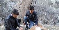 Çocuklar, yaban keçisini kurtarmak için seferber oldu