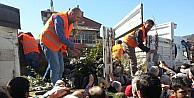 Devrek Orman İşletme Müdürlüğünden ücretsiz fidan dağıtımı