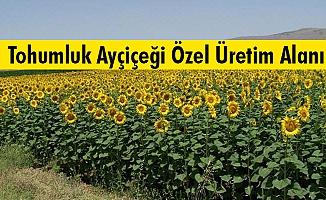 Uyarı... Tohumluk Ayçiçeği Özel Üretim Alanı