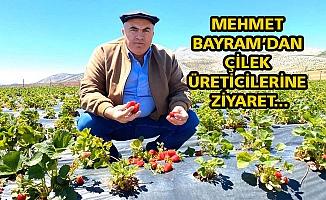 MEHMET BAYRAM'DAN ÇİLEK ÜRETİCİLERİNE ZİYARET...