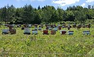 Düzce'de 400 dekarlık bal ormanı arıcılara hizmet verecek