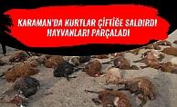 KARAMANDA KURTLAR ÇİFTİĞE SALDIRDI HAYVANLARI PARÇALADI