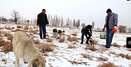 Aksaray'da soğuk havada sokak hayvanları unutulmadı