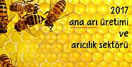 Ana arı üretimi 2017 ve Türkiye'de arıcılık