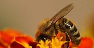Arıcılıkta İlkbahar Bakımı Nedir Nasıl...