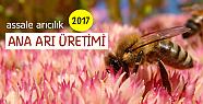 Bircan, Assale olarak ana arı üretimine devam etmekteyiz